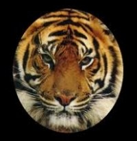 Tiger face graphic