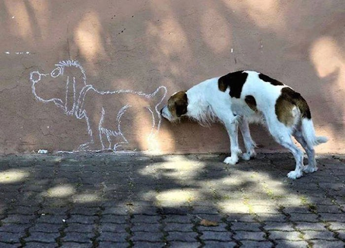Dog sniffing a wall.