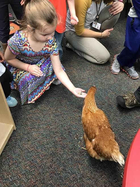 student petting a chicken