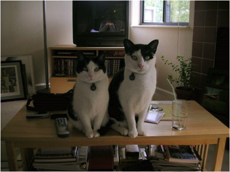 My cats, Nike and Dasha.