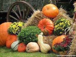 Fall pumpkins.