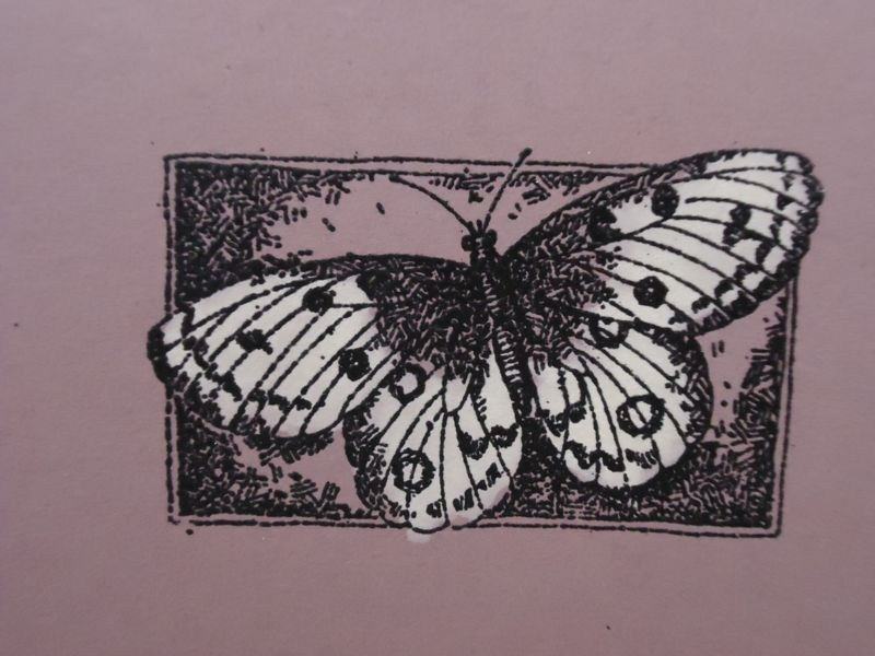 Butterfly card make from Stampin Up.