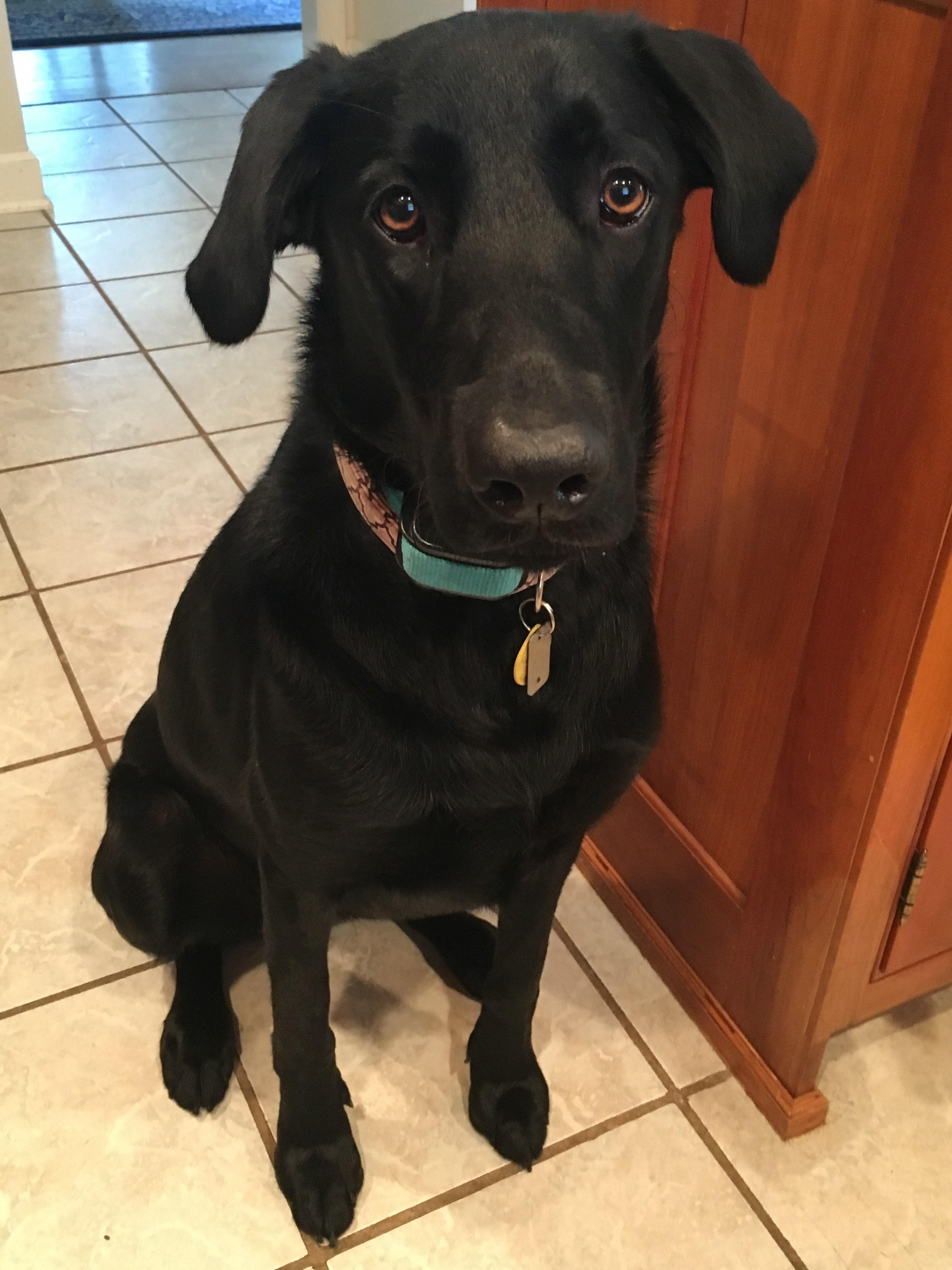 Miss Bentley's dog, Breezy