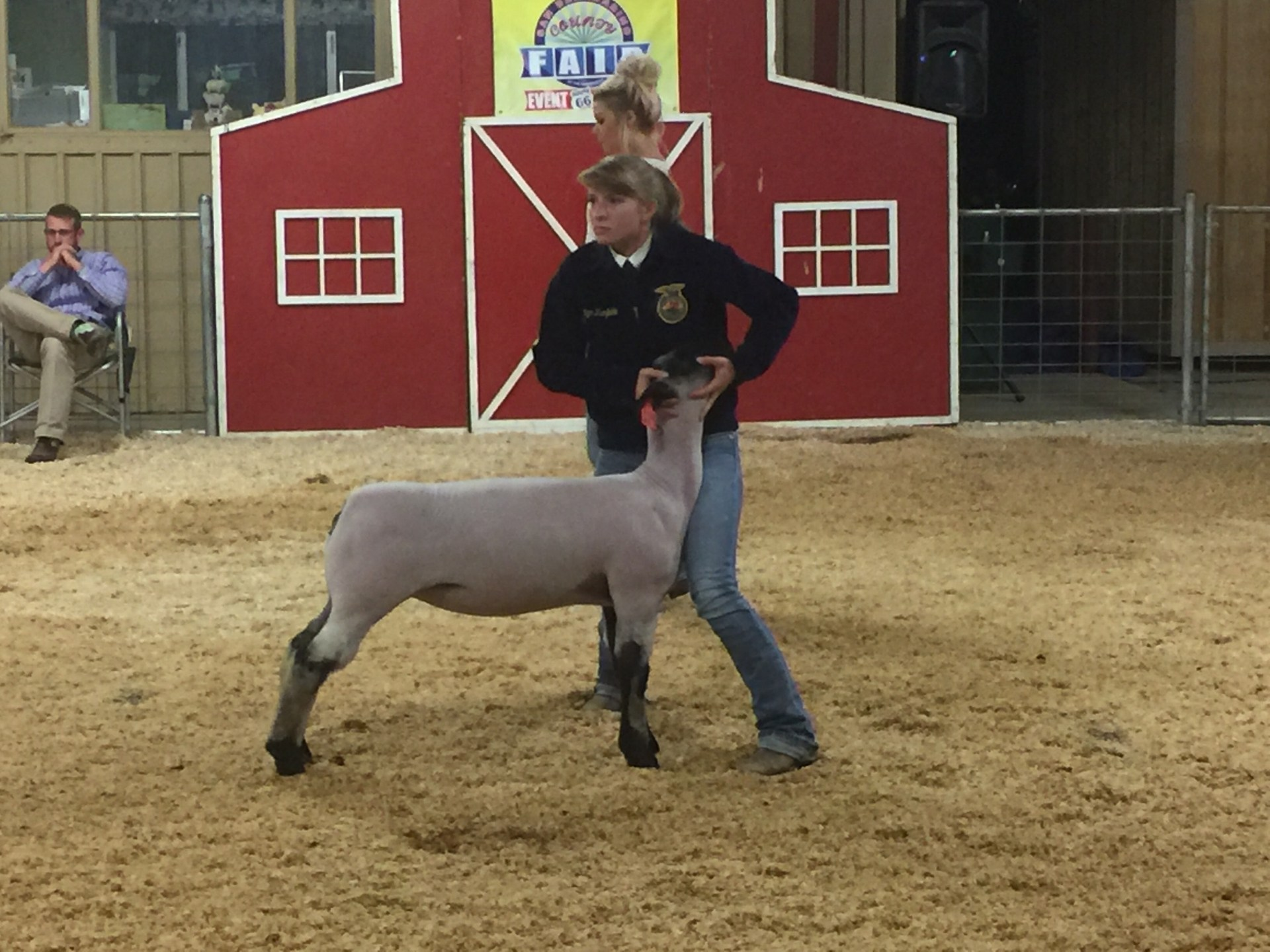 Student showing sheep