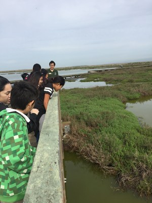 Students observing the marsh habitat