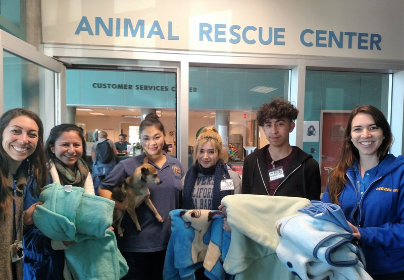 Ingenium Charter School Families Help Furry Friends Featured Photo