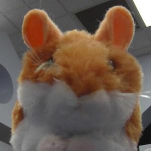 Ashley Sheller's Profile Photo