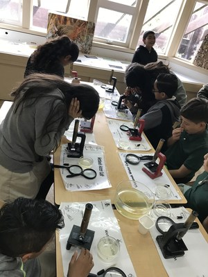 students examining water samples, image 2