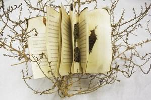 hayleys tumbleweed book3.jpg