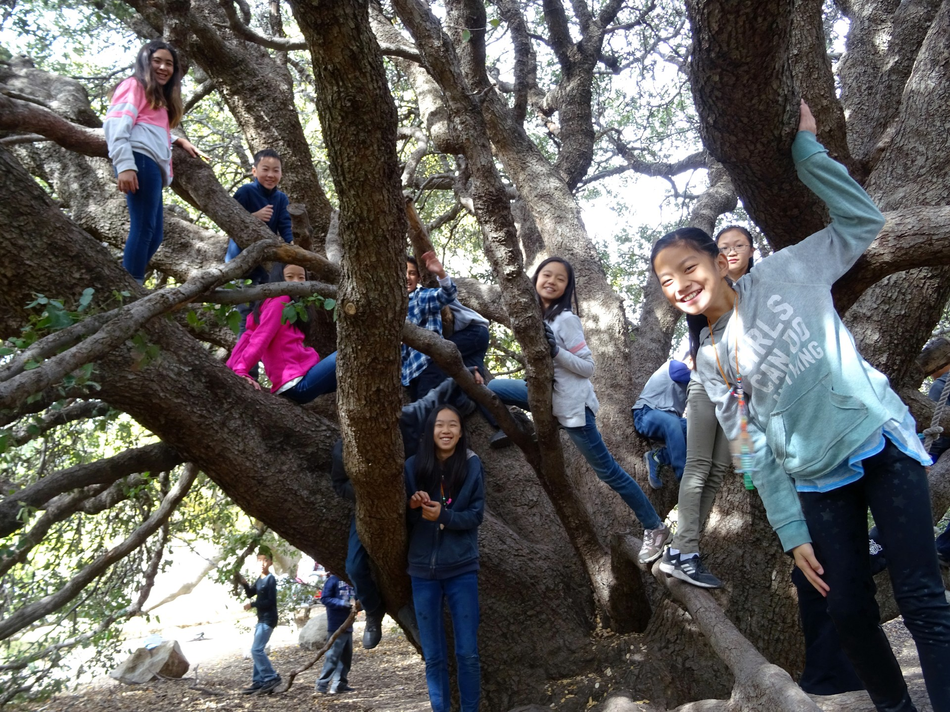 6th grade students in a tree at OSS