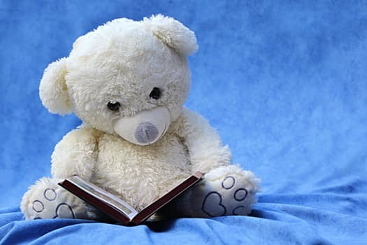 Bear reading a book.