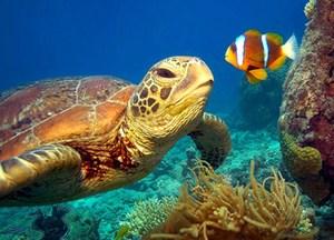 ocean readathon.jpg