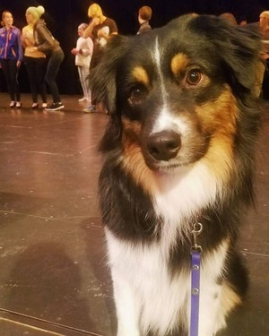Q, the dog playing Annie, on stage during rehearsal