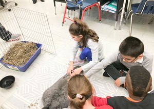 Group 8 petting and grooming Emme the Rabbit