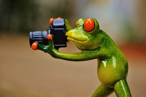 Frog Taking Pictures