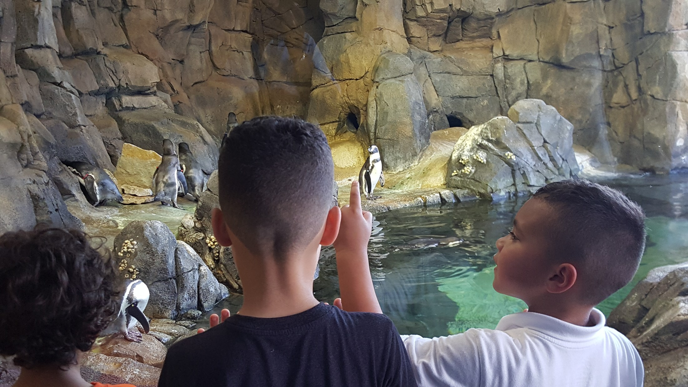Kids looking at penguin