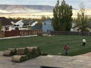 Grass 1.jpeg