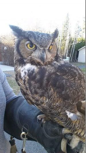 OLC owl web.jpg