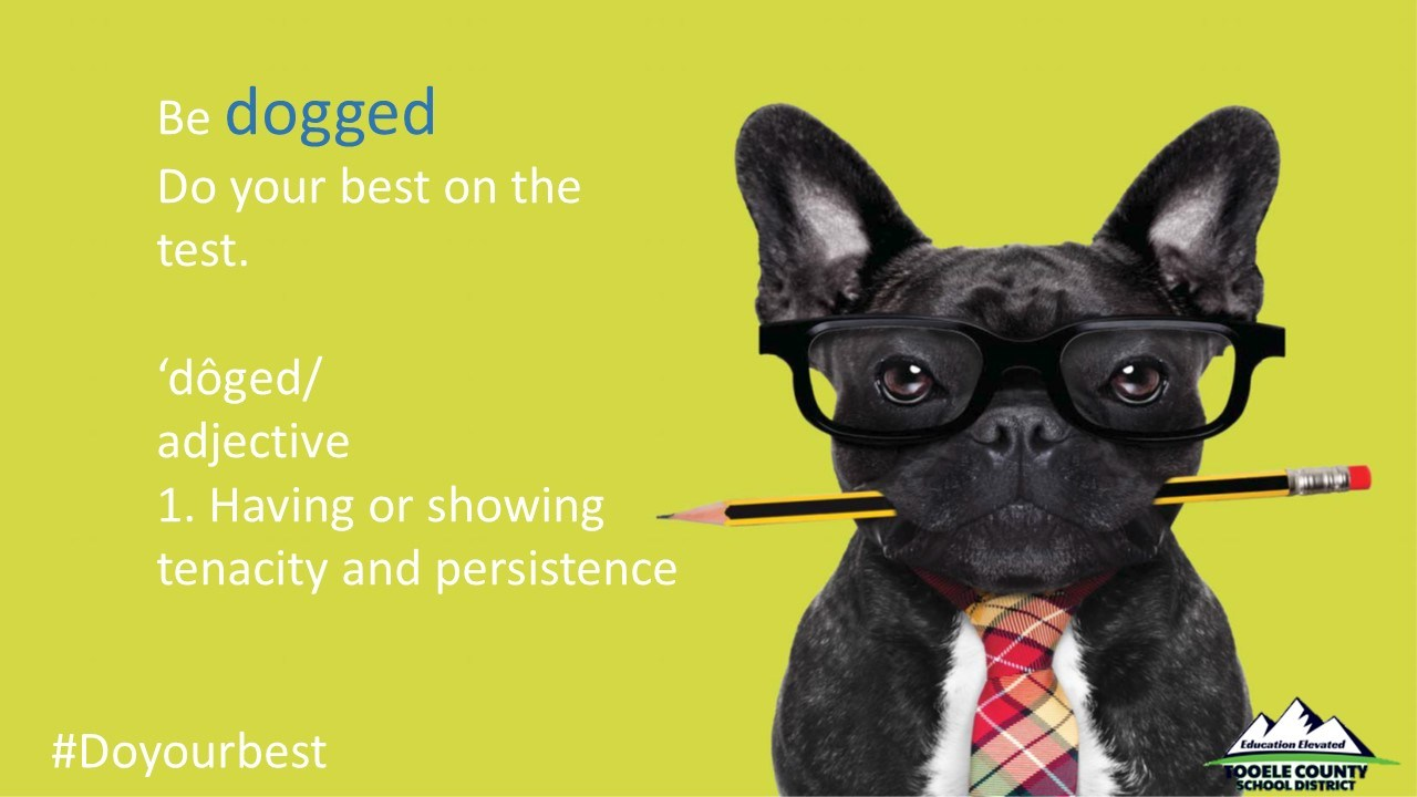 SAGE Dog w/glasses