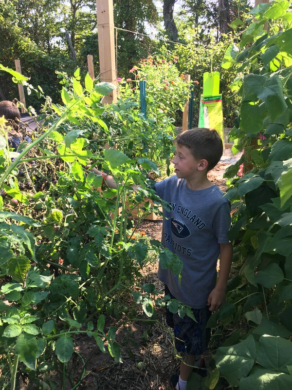 Garden Club on Mondays Featured Photo