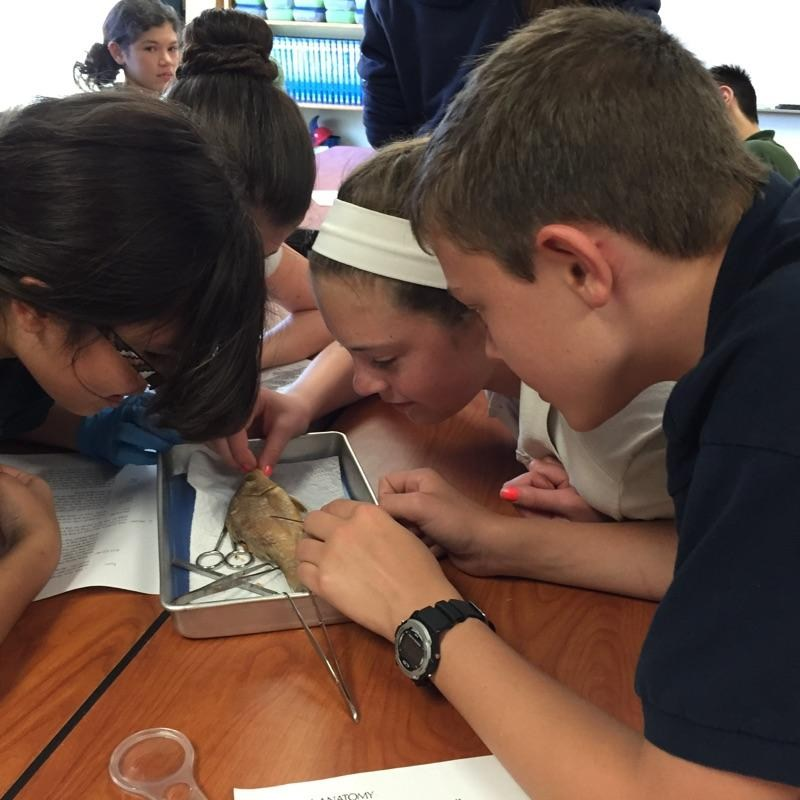 The aquatic biology lab spent the afternoon dissecting fish in class.