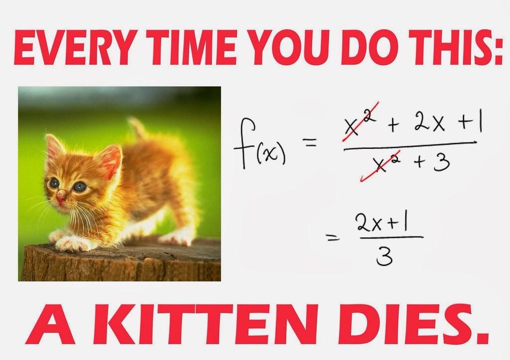 A Kitten dies