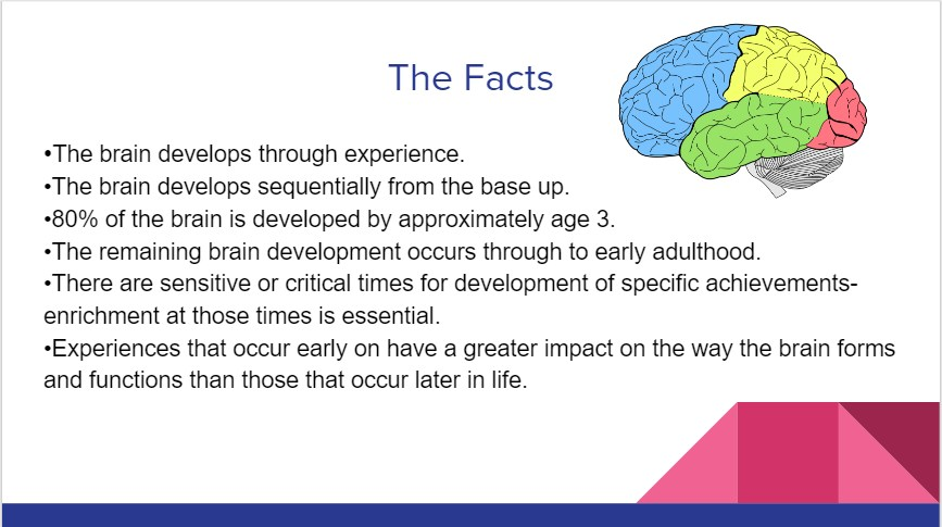 facts about how trauma effects the brain