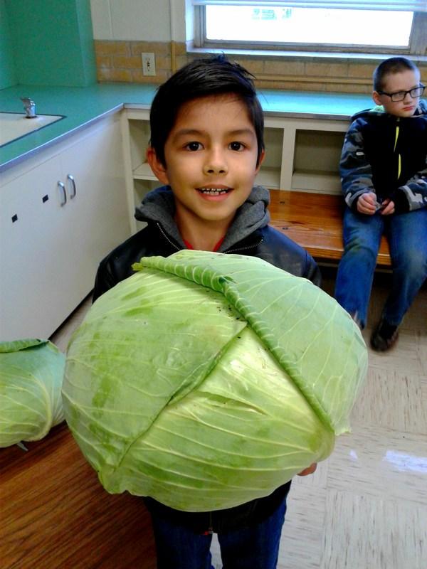 Bonnie Plants Cabbage Growing Program