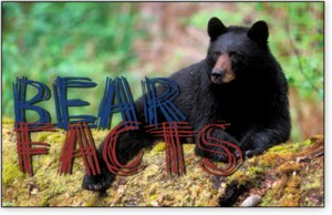BearFactsPhoto.png