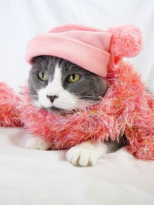 cat in pink hat and scarf