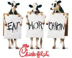 chick fil a cows holding sign eat more chicken