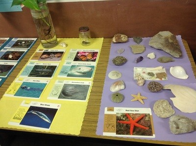 Shells and pictures of various marine animals.
