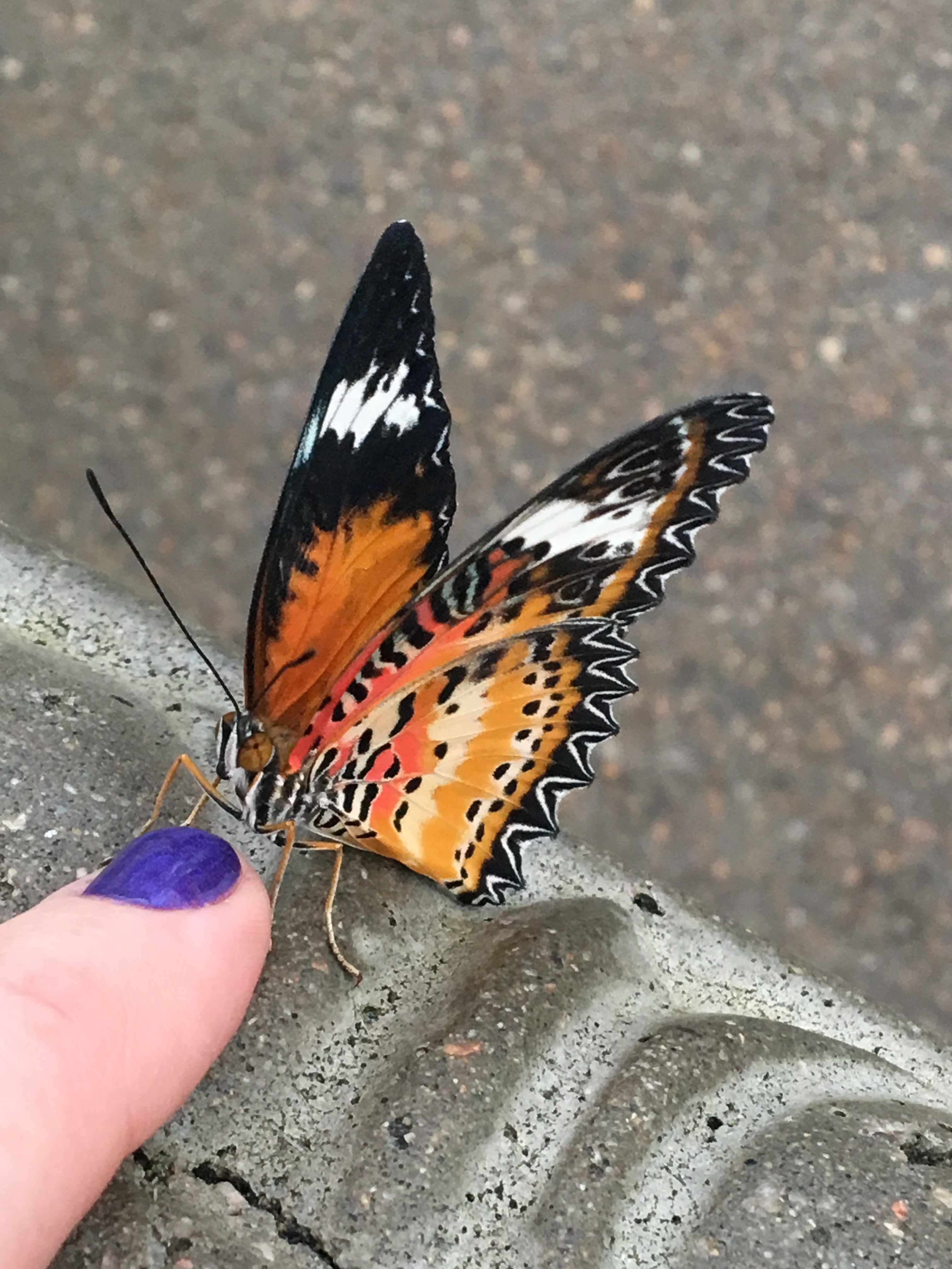 A close up of a butterfly