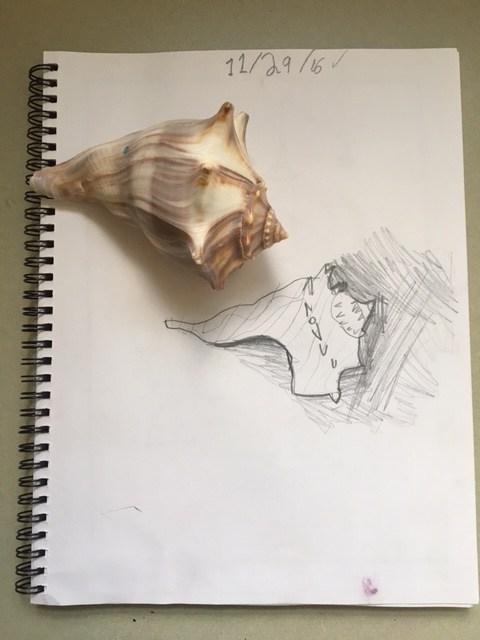 Still life drawing of shell