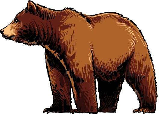 Northwest Bear Mascot