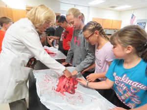 Dr. Jayne Courts lets students examine a pig's lungs during the career fair.