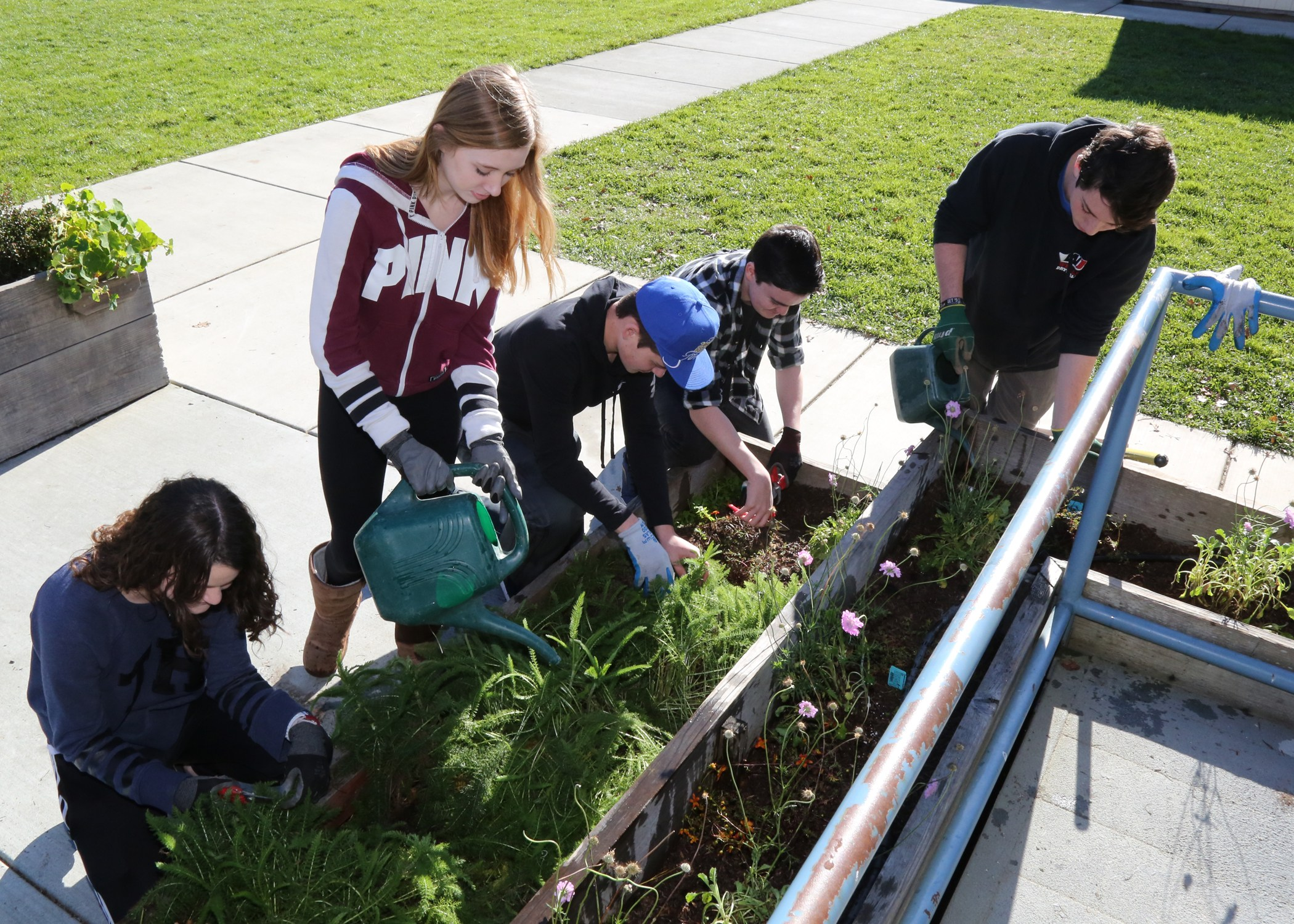 Students in Agro-ecology weeding garden box