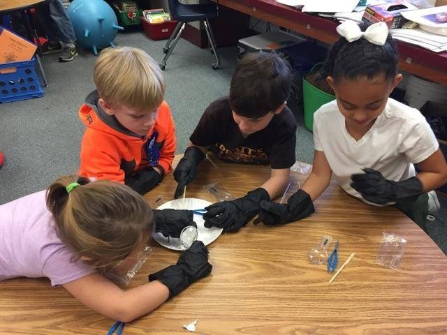 Mrs. Cutler's 2nd grade scientists Featured Photo