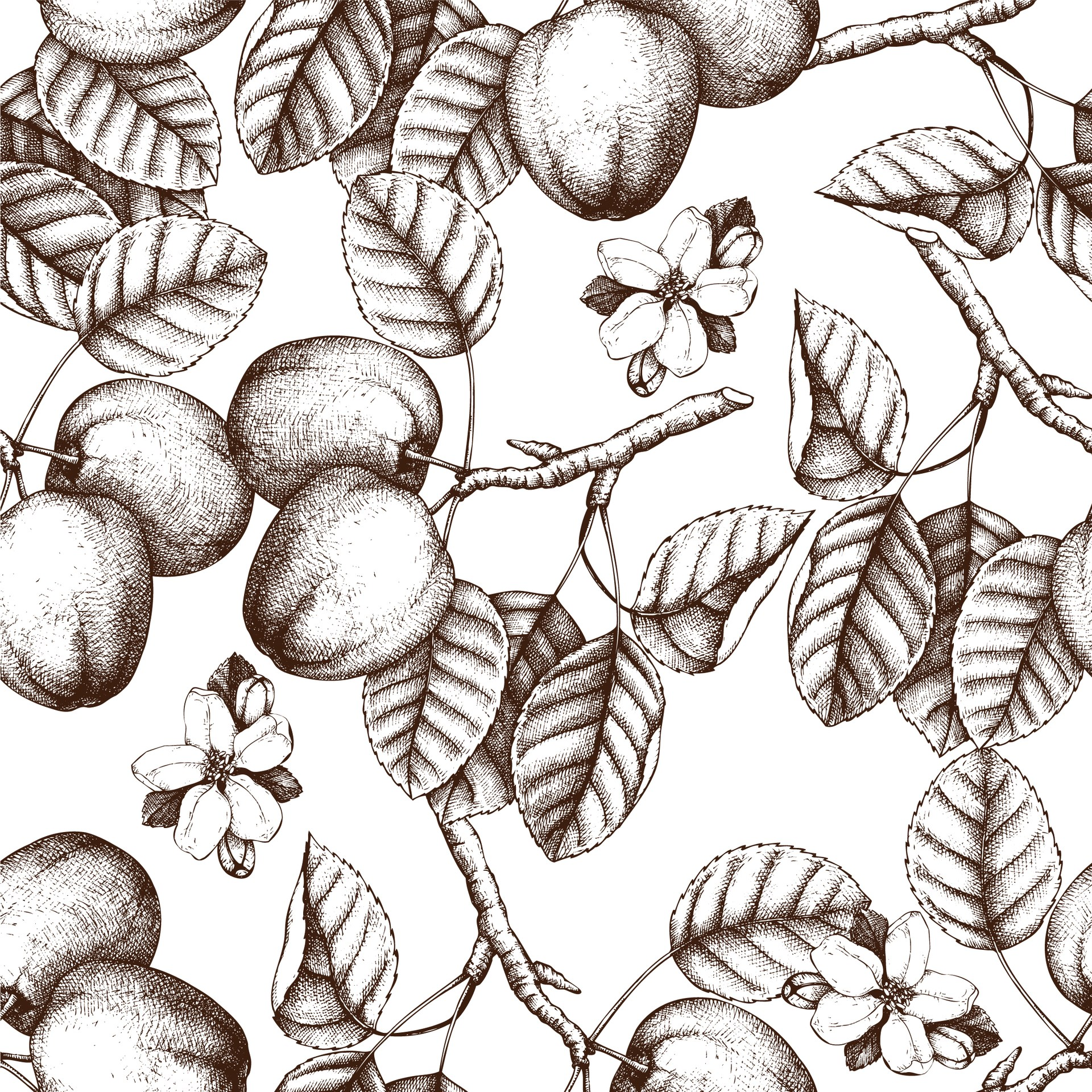 Apples and leaves line drawing