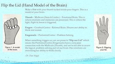 Flip the lid, hand model of the brain