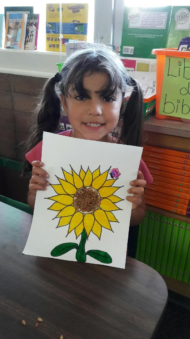 2nd grade learning about sunflowers