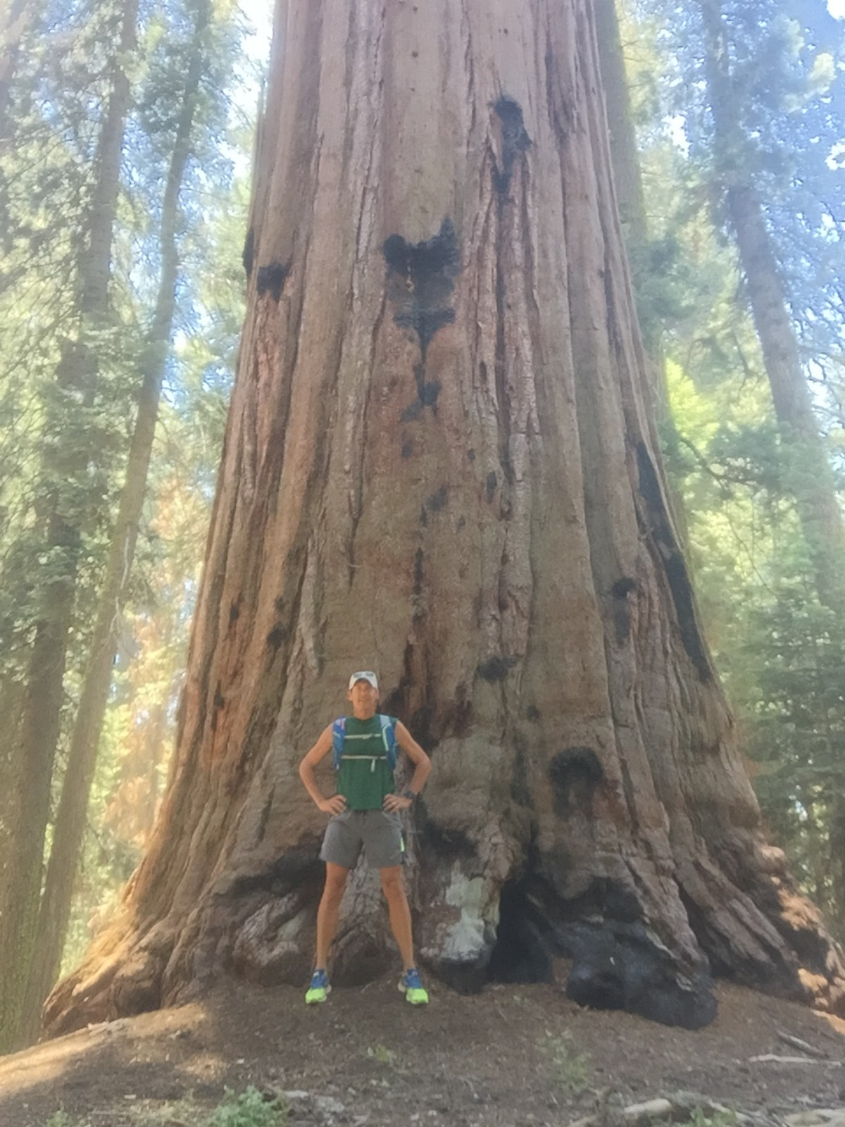 In front of large redwood tree in the John Muir Grove