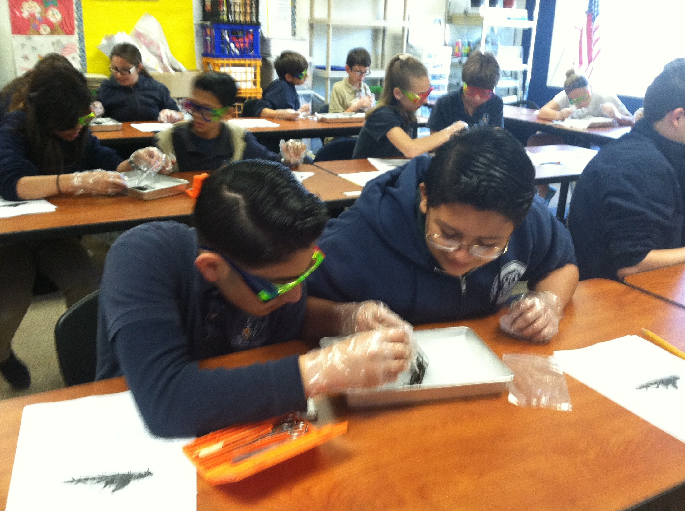 Students in 7th grade have been learning about the different Phylum of Invertebrates. Today students dissected grasshoppers which are Arthropods.