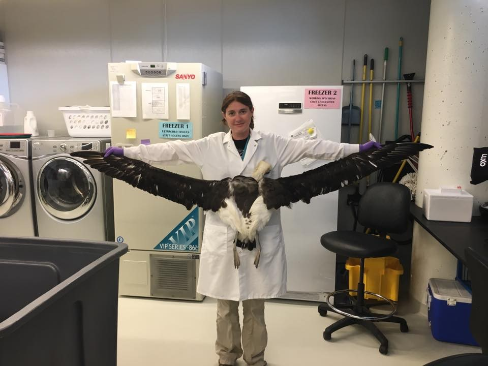 Me with a laysan albatross specimen I prepared for the DMNS.