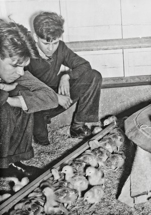 two boys looking a baby chicks being raised at the school.