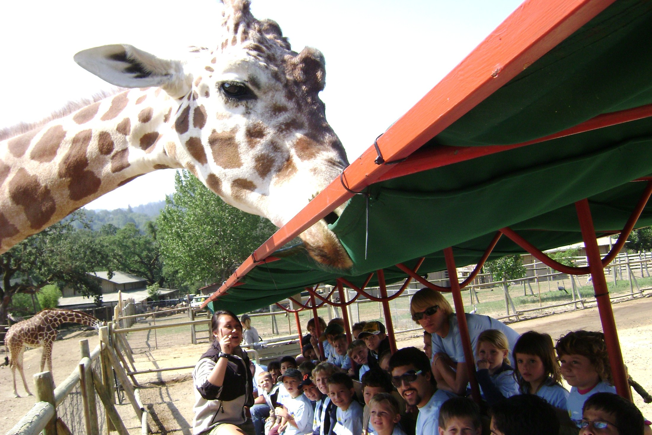 Students with giraffe