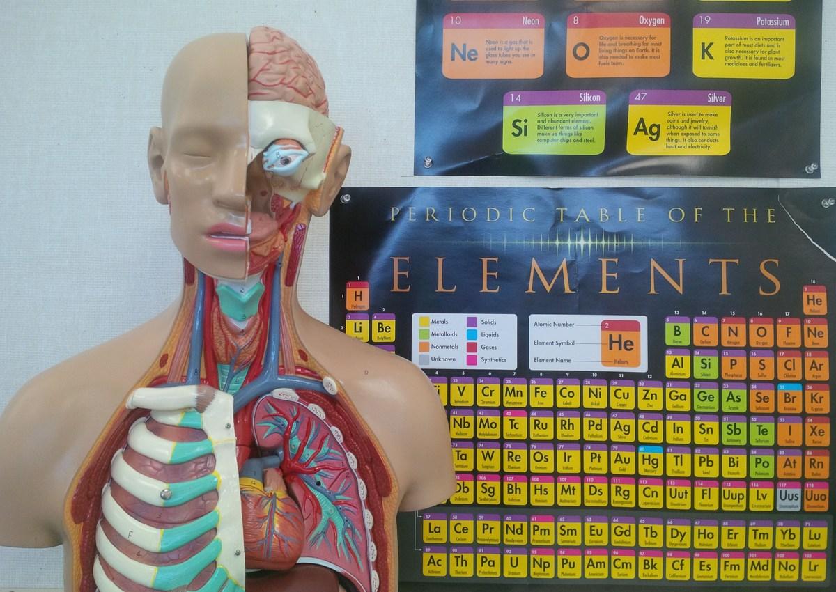 Health Science Essentials - Programs - New Haven Adult School