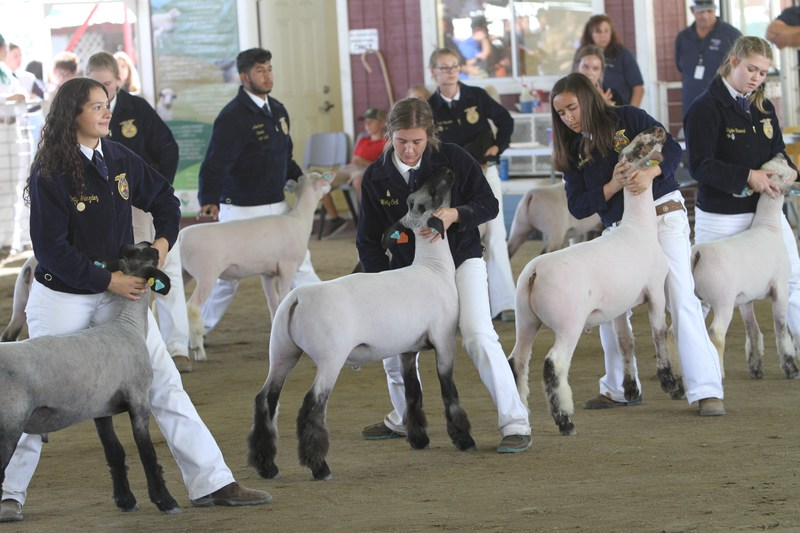 Kern High School District Agriculture Students Take Top Honors at Kern County Fair Thumbnail Image