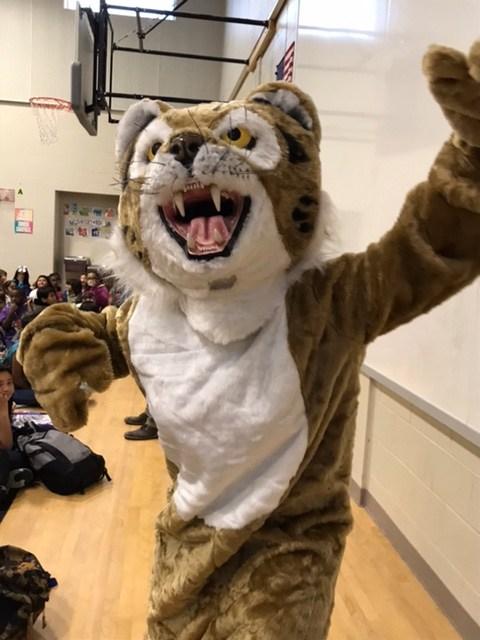Bobcat on campus! Thumbnail Image