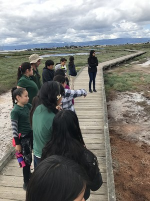 students look at the salt marsh, image 3